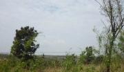 转让山东烟台千亩山林,依山傍水环境优美,可开发开采