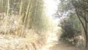 杭州余杭区山地120亩整体转包
