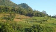 投资首选!(出租)出售长春附近41公顷天然林地